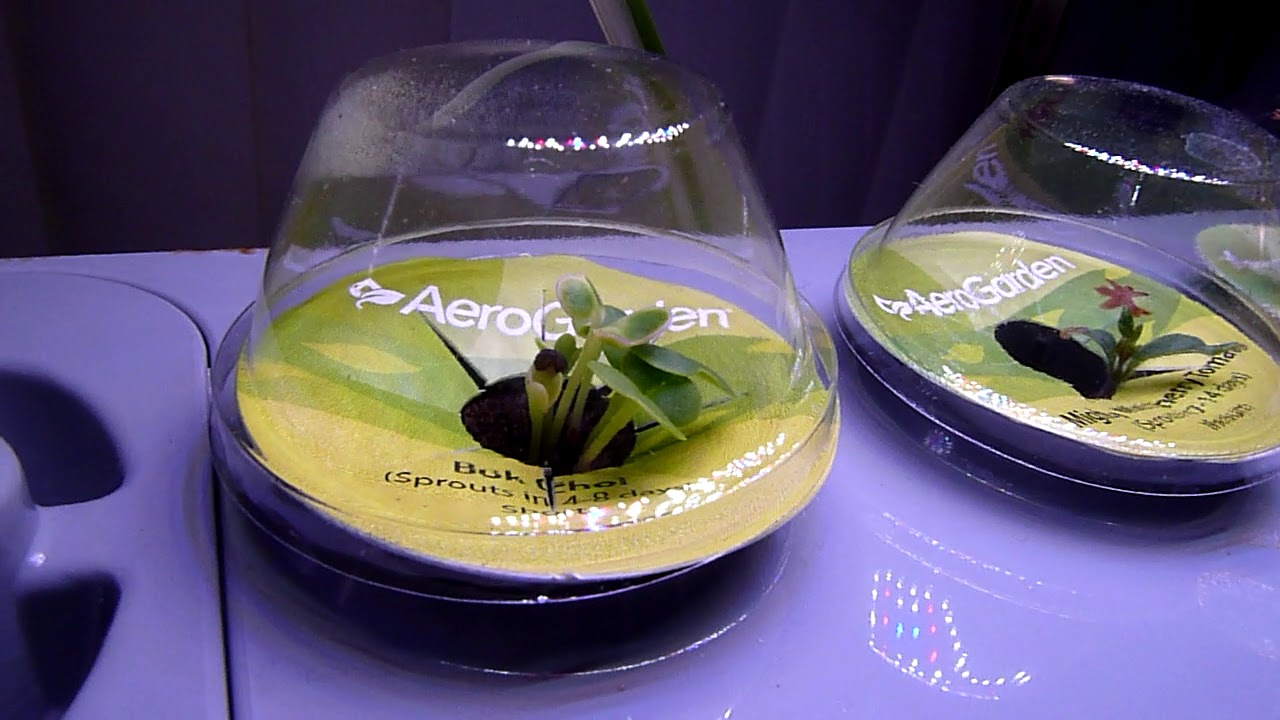 AeroGarden Sprout LED Quick Overview